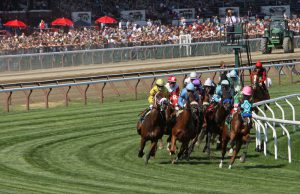how many horses are in a race