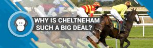 cheltenham such a big deal
